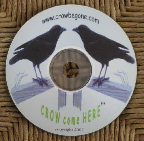 Crow come Here CD